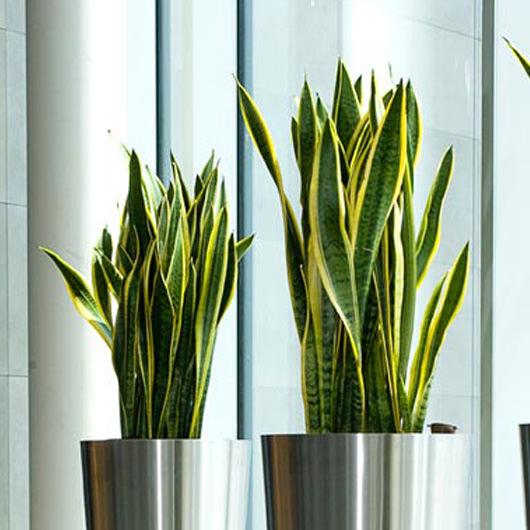 530-indoor-plants