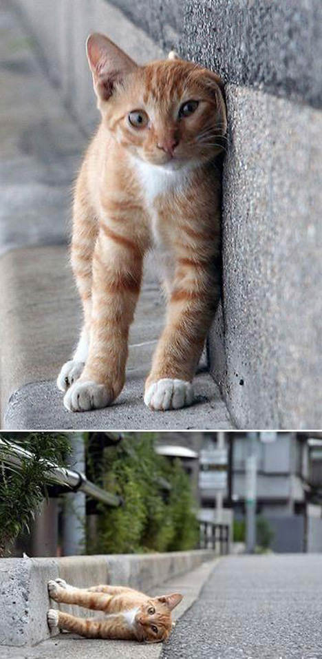 10 Amazing Cat Optical Illusion Pictures, Puzzles, Photos and More