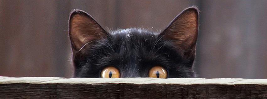 100 Cat U0026 Kitten Facebook Timeline Cover Photo