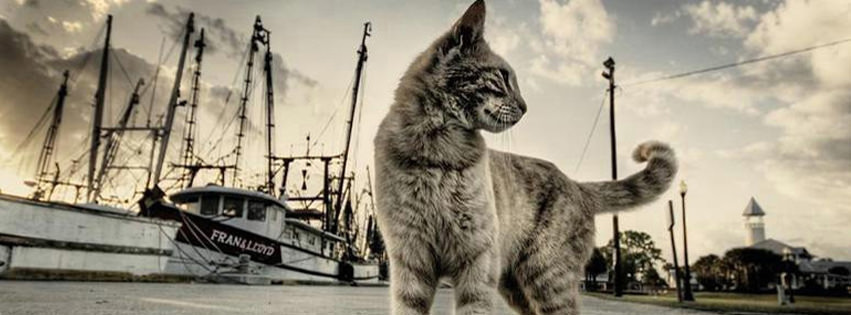 cat facebook timeline profile cover