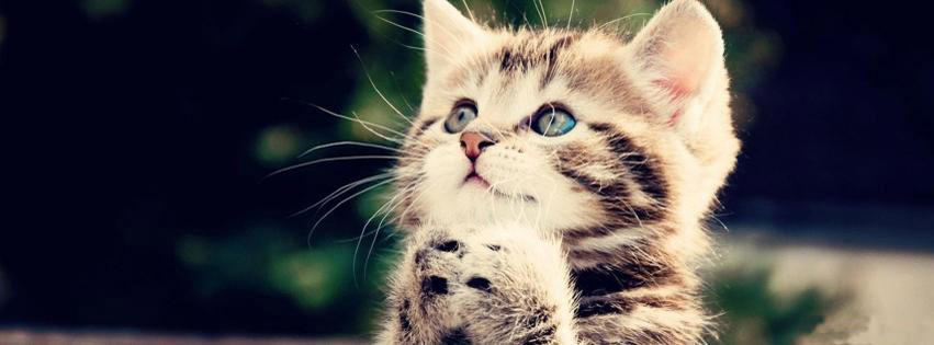 kitten begging facebook cover