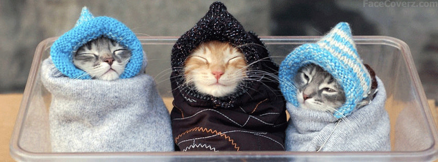 Cute Kittens Facebook Timeline Covers