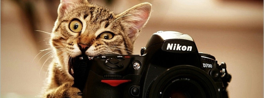 cute cat facebook timeline cover