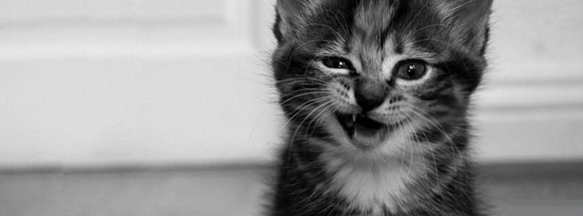Funny Cat 3 Facebook Cover Timeline Banner For Fb