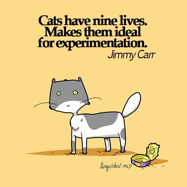 Cats have nine lives. Makes them ideal for experimentation. - Jimmy Carr 40 Funny Doodles For Cat Lovers and Your Cat Crazy Lady Friend grumpy tom talking nyan instagram pinterest facebook twitter comic pictures youtube