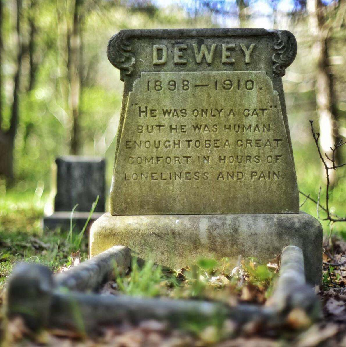 12 Beautiful Tombstone Quotes For Your Beloved Cat Or Dog