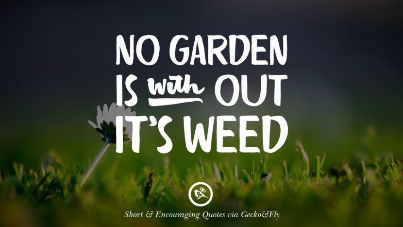 No garden is without it's weed. Beautiful Short, Nice And Encouraging Quotes For An Inspirational Day