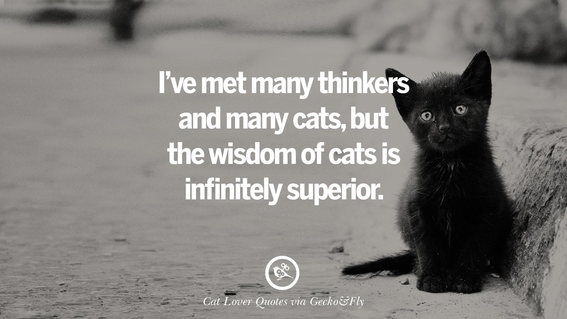 25 Cute Cat Images With Quotes For Crazy Cat Ladies ...