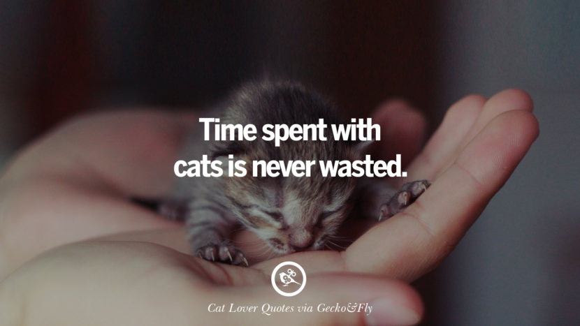 Time spent with cats is never wasted. Cute Cat Images With Quotes For Crazy Cat Ladies, Gentlemen And Lovers