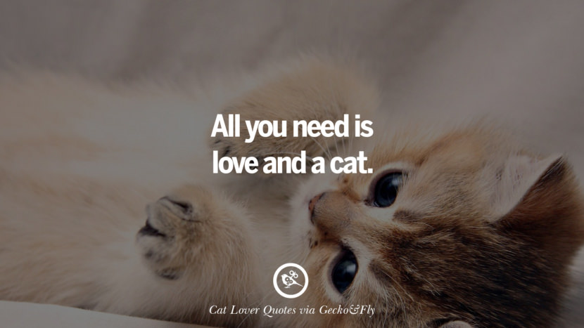 All you need is love and a cat. Cute Cat Images With Quotes For Crazy Cat Ladies, Gentlemen And Lovers