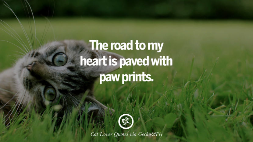 The road to my heart is paved with paw prints. Cute Cat Images With Quotes For Crazy Cat Ladies, Gentlemen And Lovers