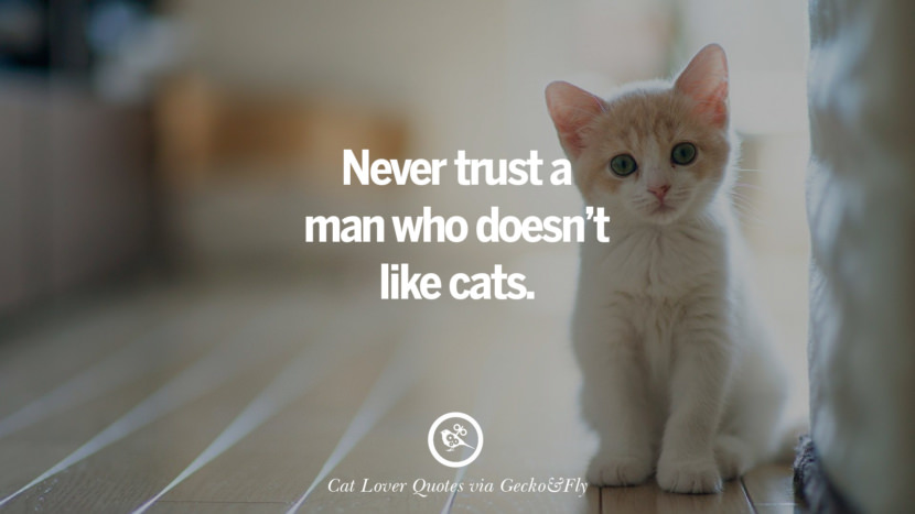 never trust a man who doesn't like cats. Cute Cat Images With Quotes For Crazy Cat Ladies, Gentlemen And Lovers