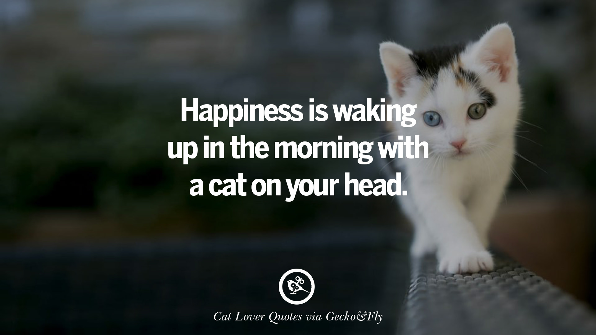 cute kitty pics with sayings | best, funny, cute, kitten ... |Cute Kittens Quotes