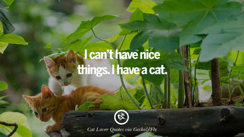 I can't have nice things. I have a cat. Cute Cat Images With Quotes For Crazy Cat Ladies, Gentlemen And Lovers