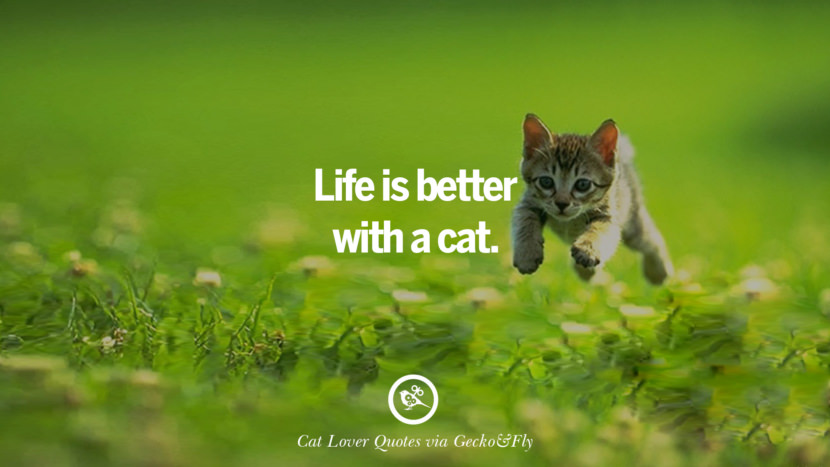 Life is better with a cat. Cute Cat Images With Quotes For Crazy Cat Ladies, Gentlemen And Lovers